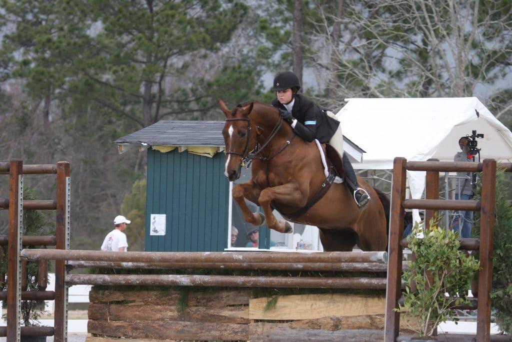 Elevate Your Ride With These 6 Tall Horse Breeds