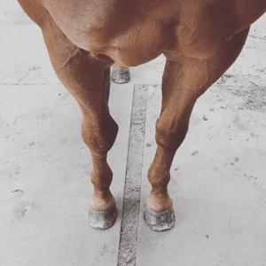 do-horseshoes-hurt-horses