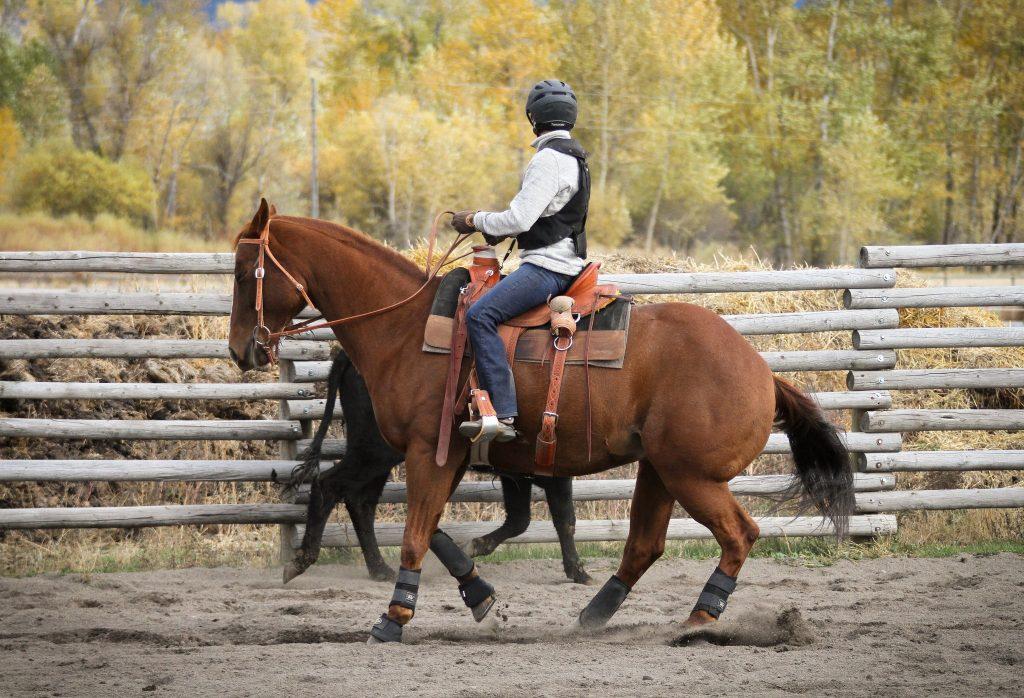 My first horse: American Quarter Horse