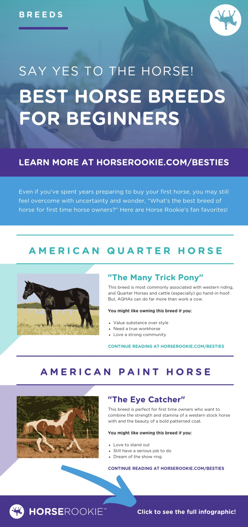 Best Horse Breeds for Beginners Infographic Teaser