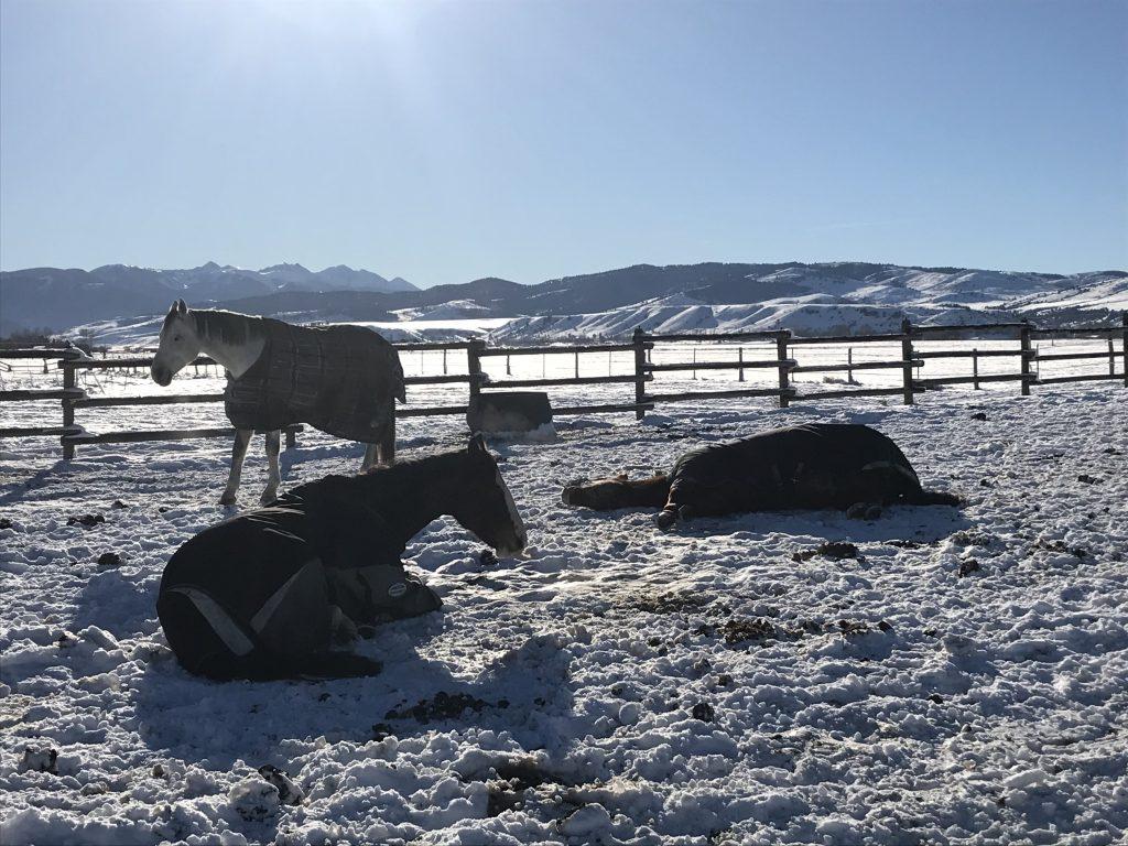 how-horses-sleep-positions