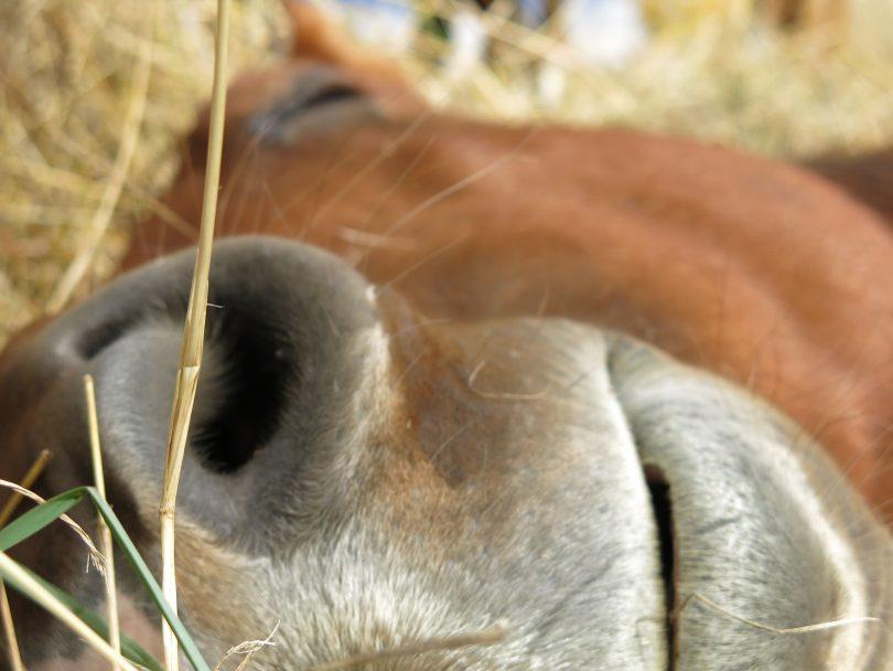 how-horses-sleep-hero-2