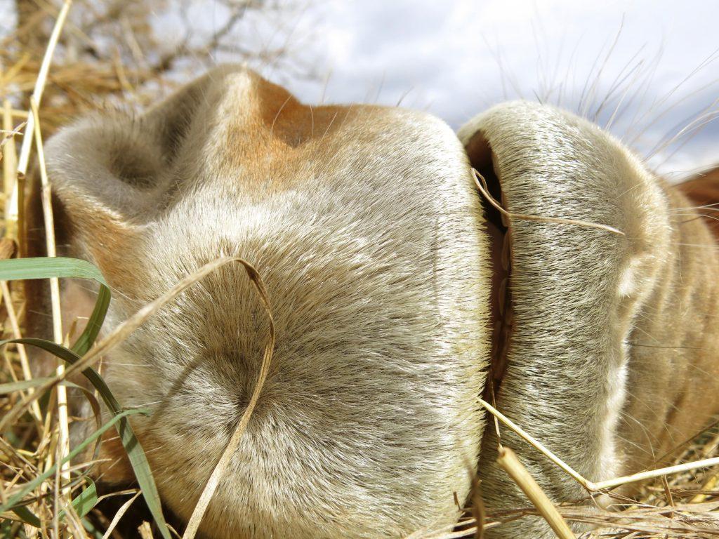 how-horses-sleep-muzzle