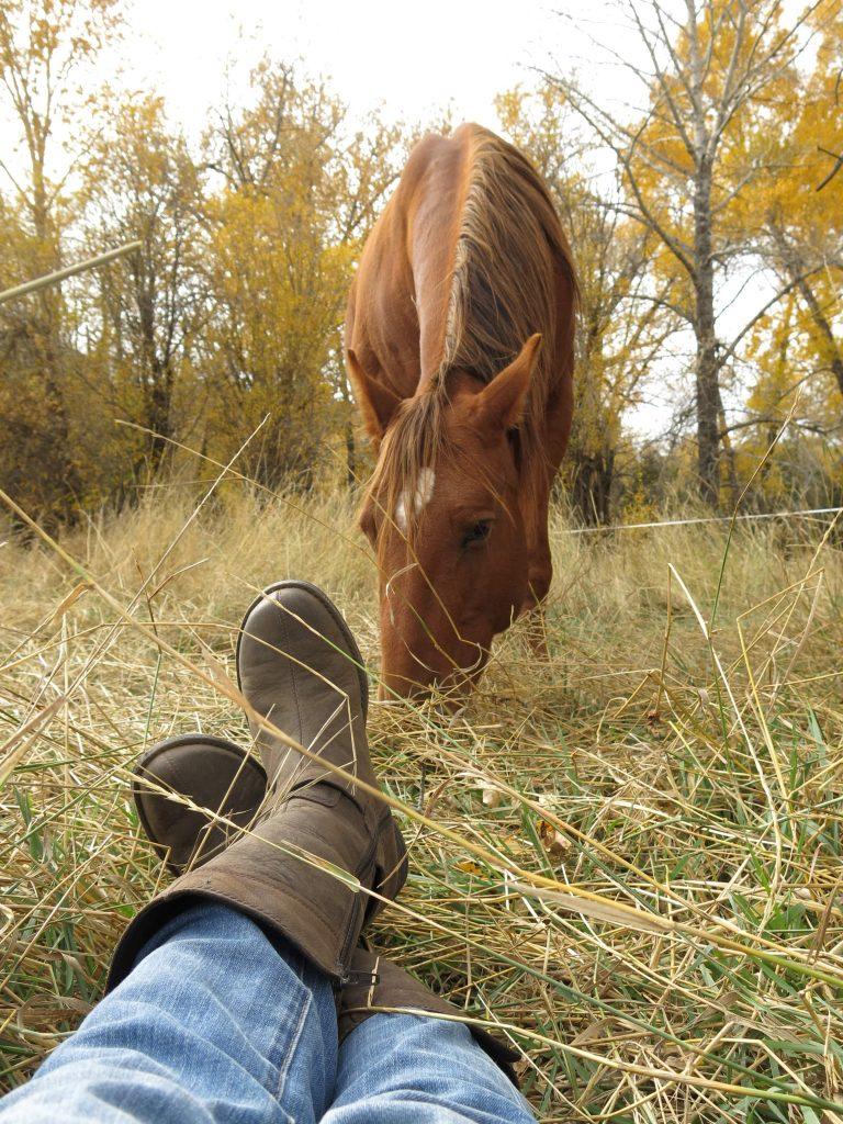 horseback-riding-yoga-pants