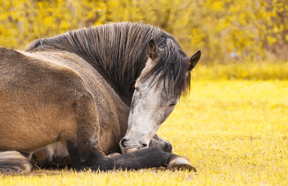 sleep-aids-horses