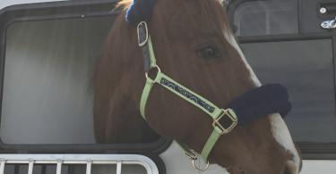 horse-trailer-weight-2