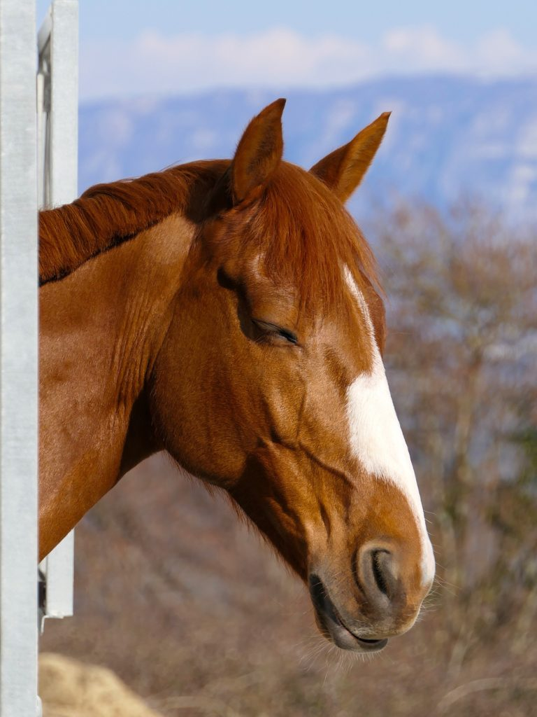 horses sleep standing up