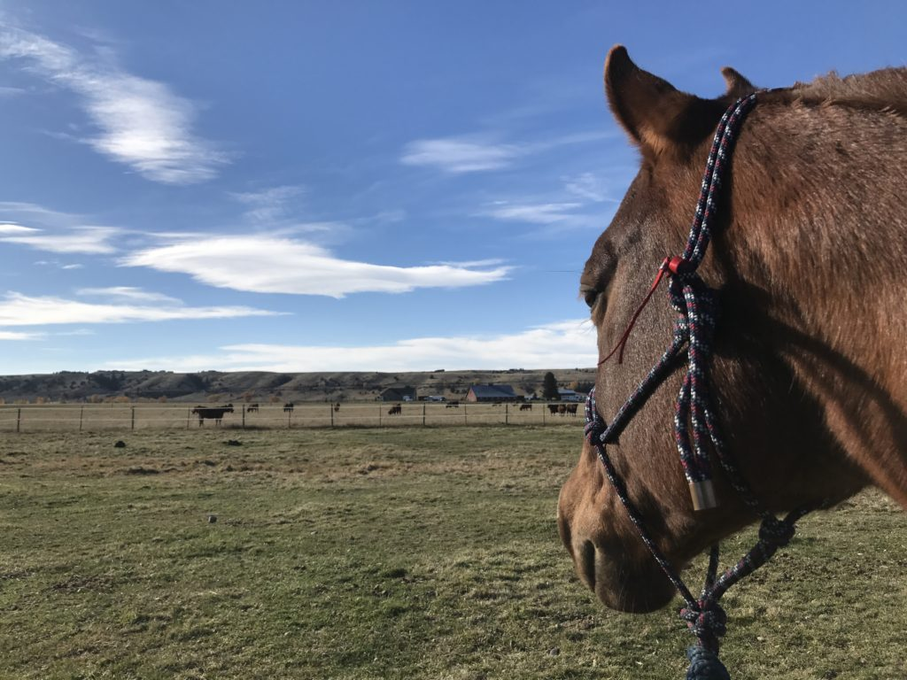 horse-rider-nervous