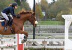 best-stirrups-jumping-2