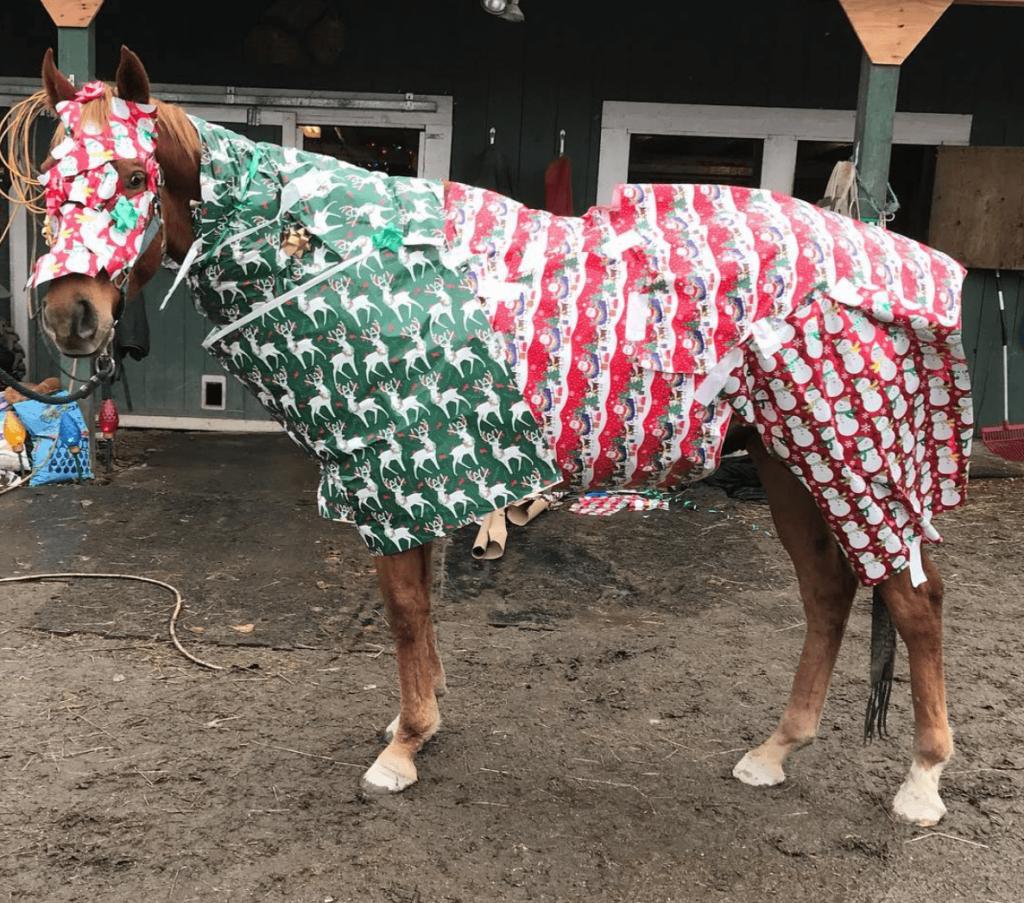 wrap-horse