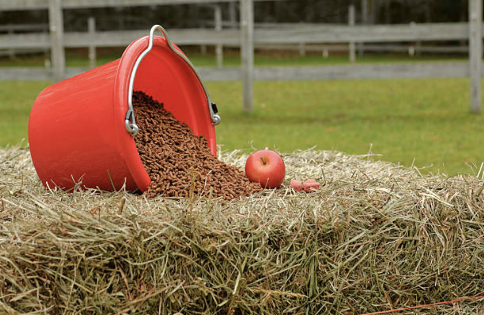 how-to-feed-horse-grain
