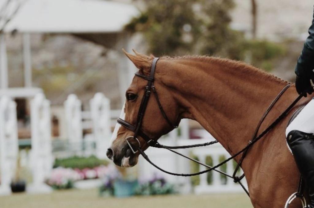 Performance-Horse-Feeding-2