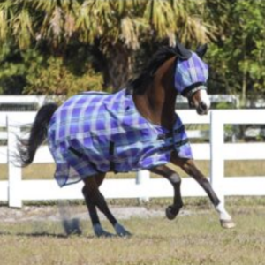 most-durable-fly-sheet-horses