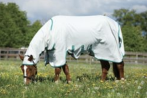 best-fly-sheet-uv-protection