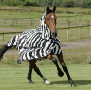 best-fly-sheet-quarter-horses