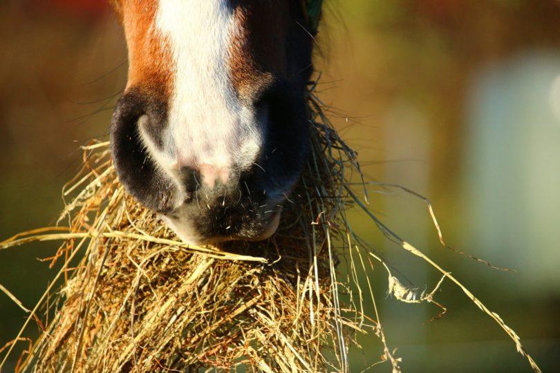 what-do-horses-eat