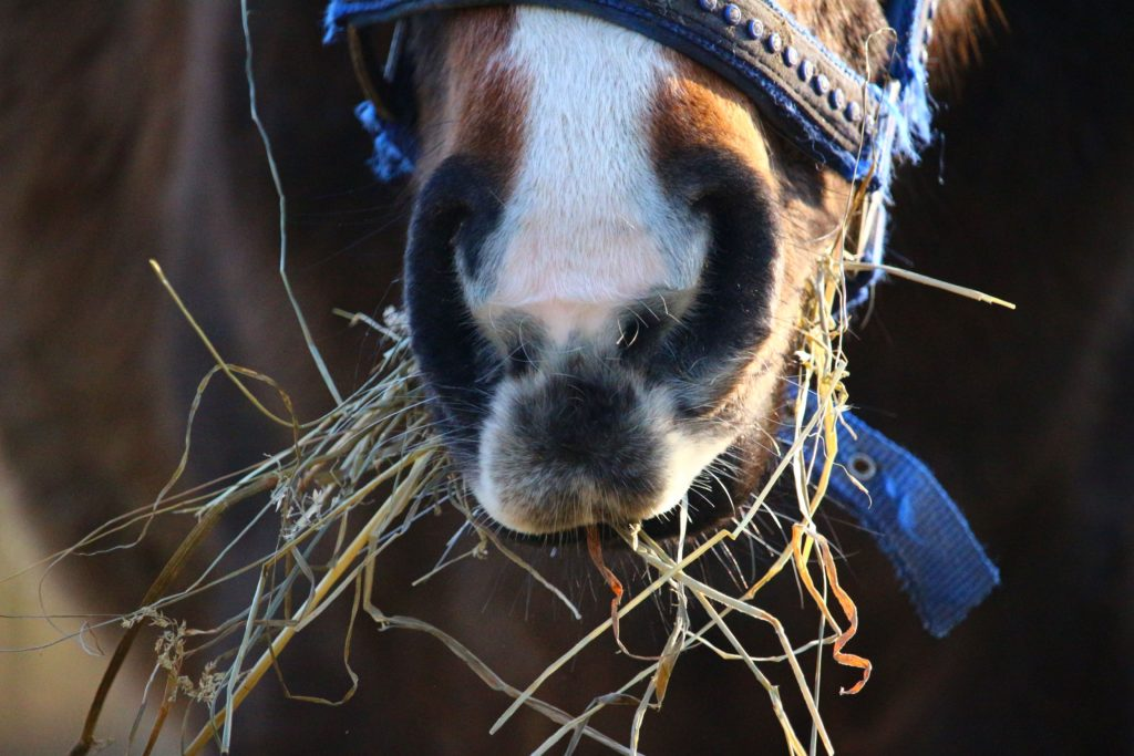 how-to-feed-horse-hay