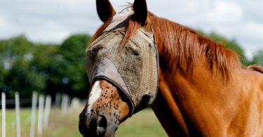 best-horse-fly-spray-homemade