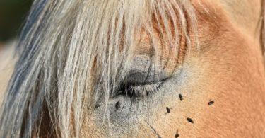 best-horse-fly-sheet