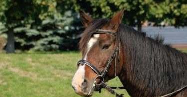 english-types-horse-bits