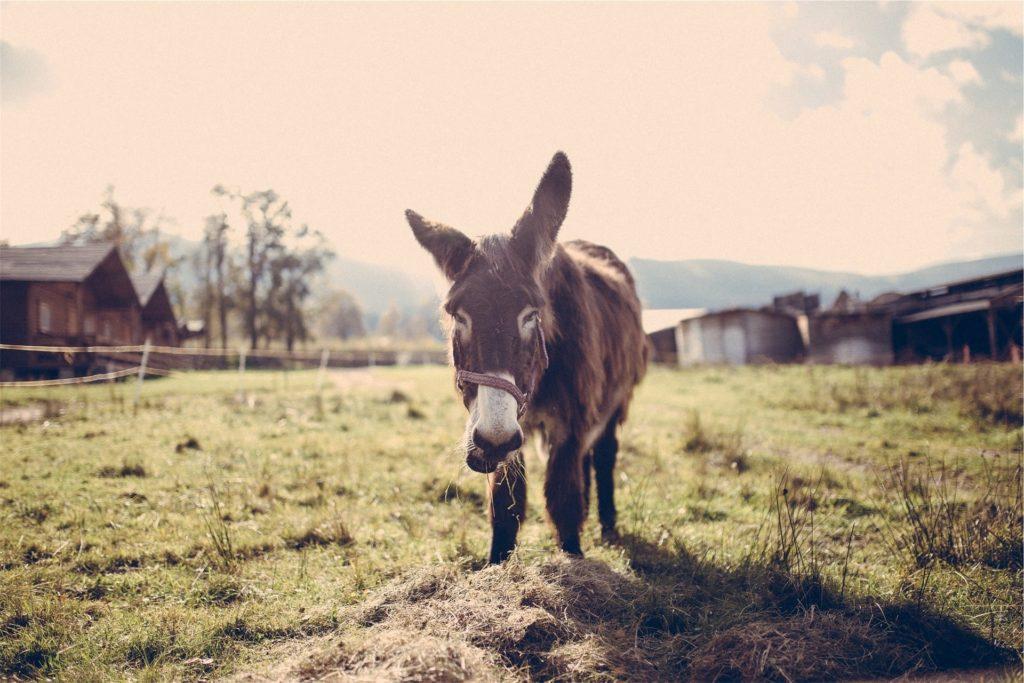 horse-feed-strategy