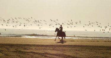 wear-horse-riding-vacation-hero