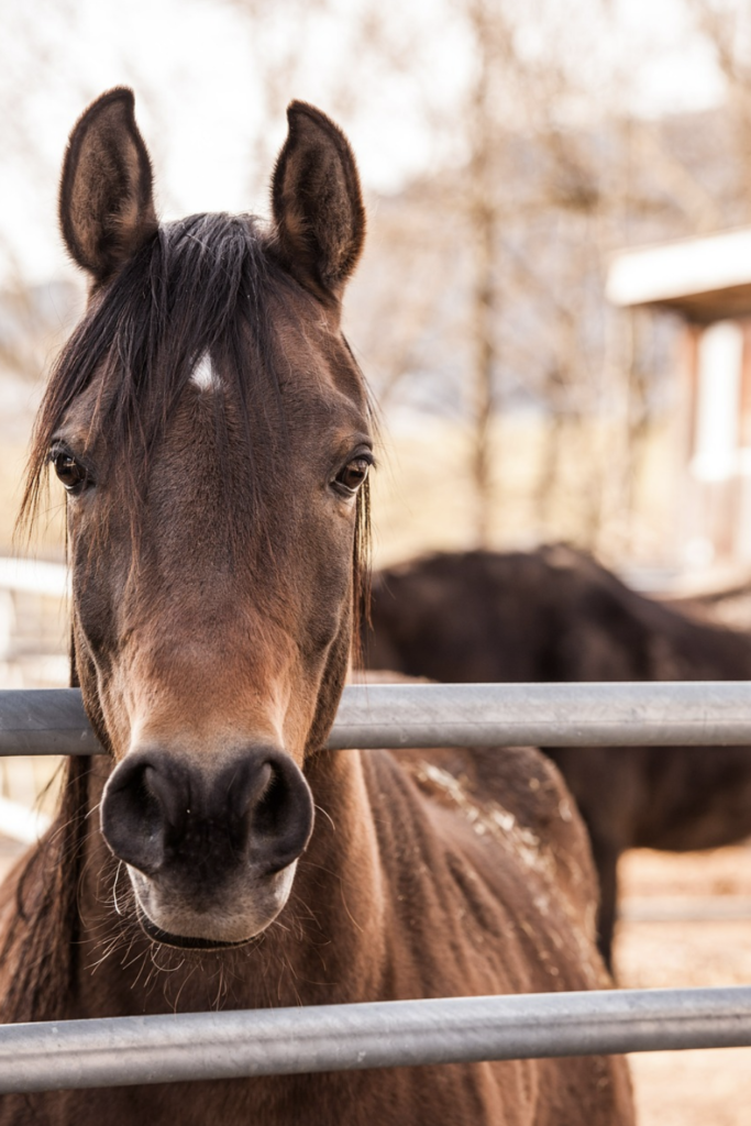 questions-horse-buying