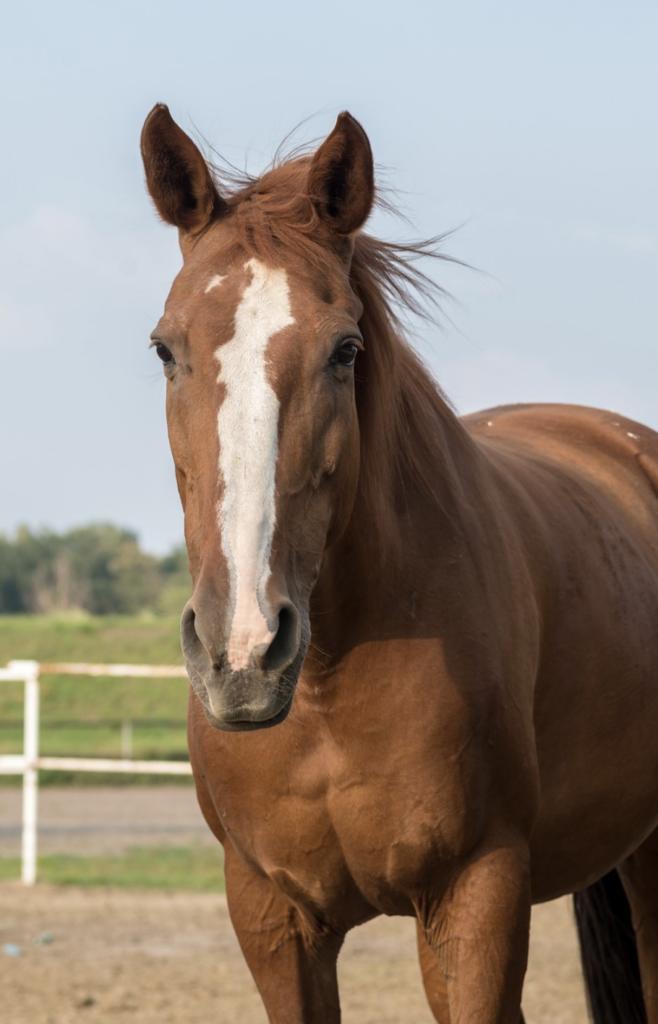 horse-buying-history