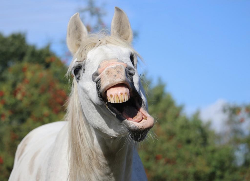 horse-health-questions