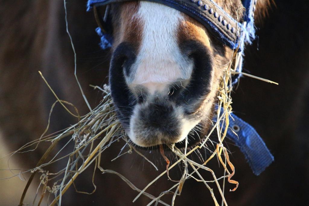 horse-feed