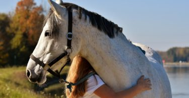 calmest-horse-breeds