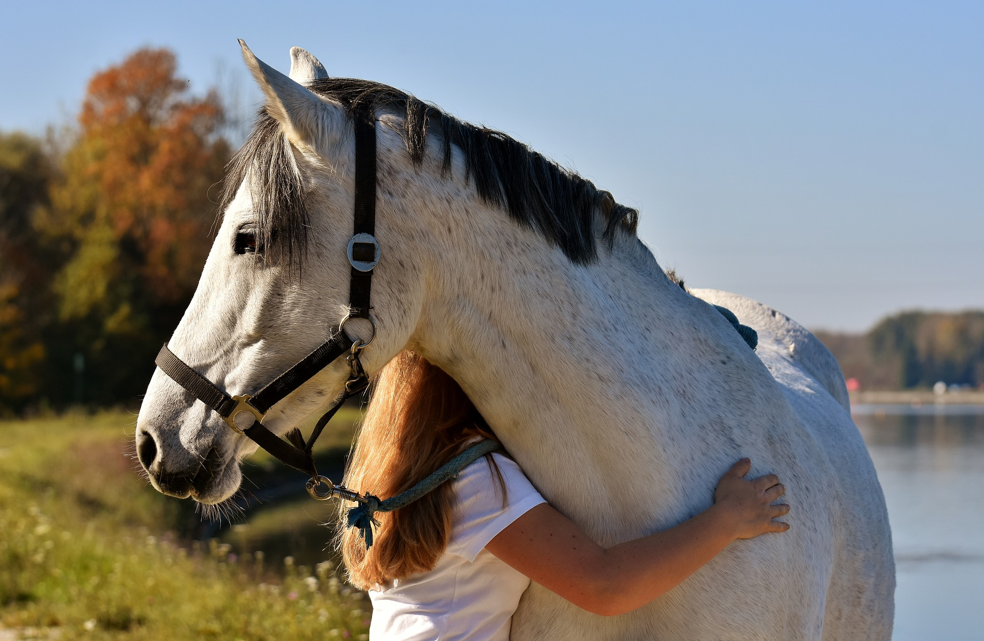 Keep Calm Ride On Meet The 5 Calmest Horse Breeds