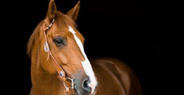 types-horse-bits
