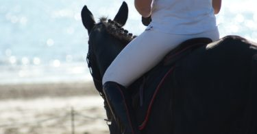 horse riding breeches hot weather