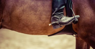 how-to-become-working-student-equestrian