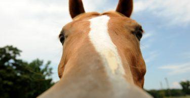 best-horse-cameras