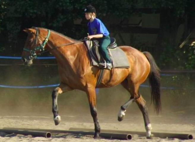 horse-ground-poles