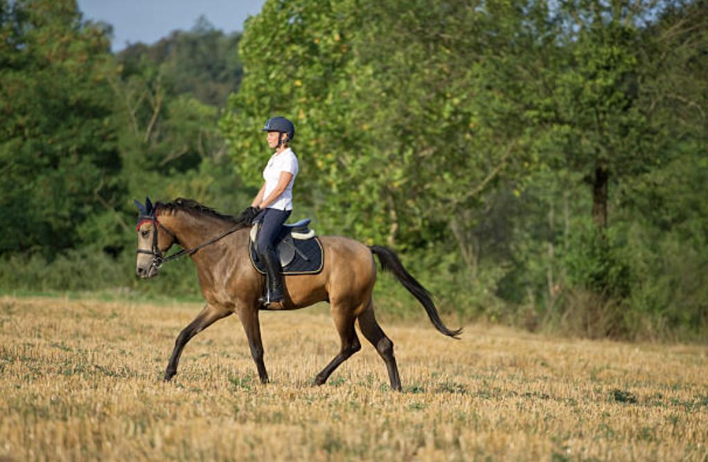 summer-horse-riding-wear