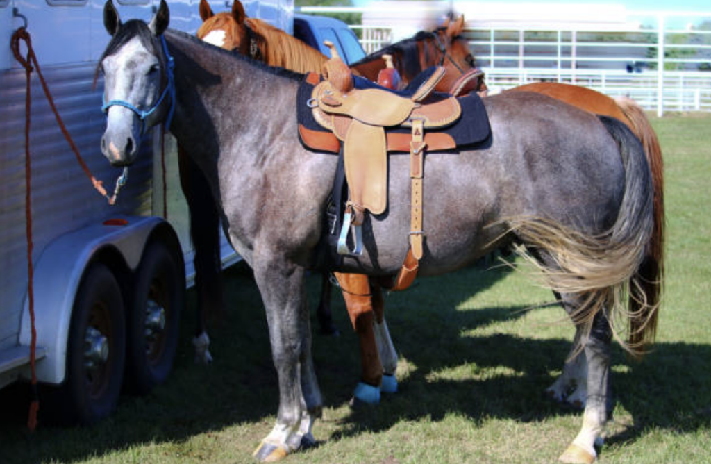 How Much Horses Cost How You Can Actually Afford One
