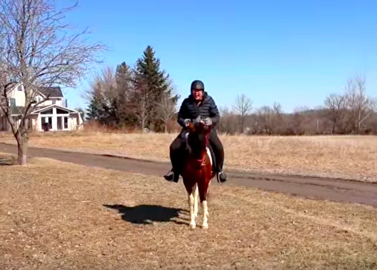 First-horse-fall-day-by-day-vlogs