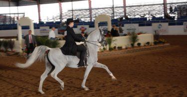 best-saddle-seat-saddle-min