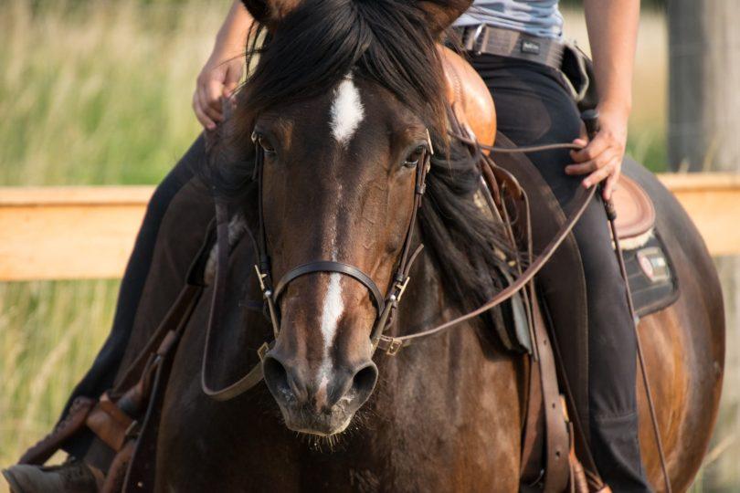 best-horse-riding-gear