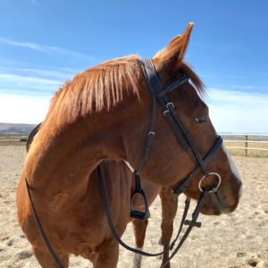 horse-riding-lessons