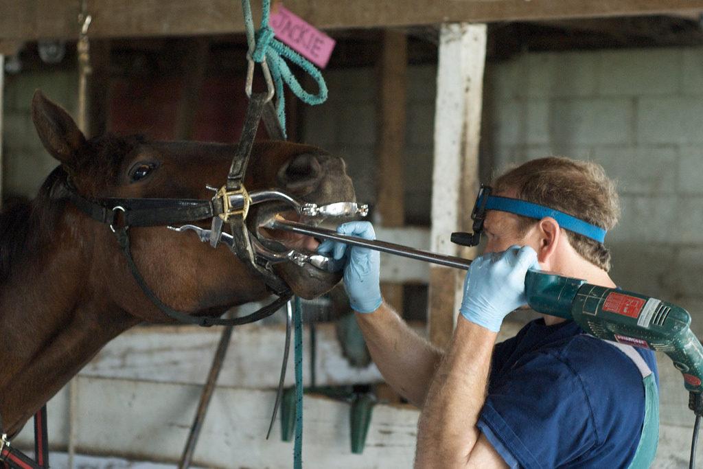 equine-dental-care