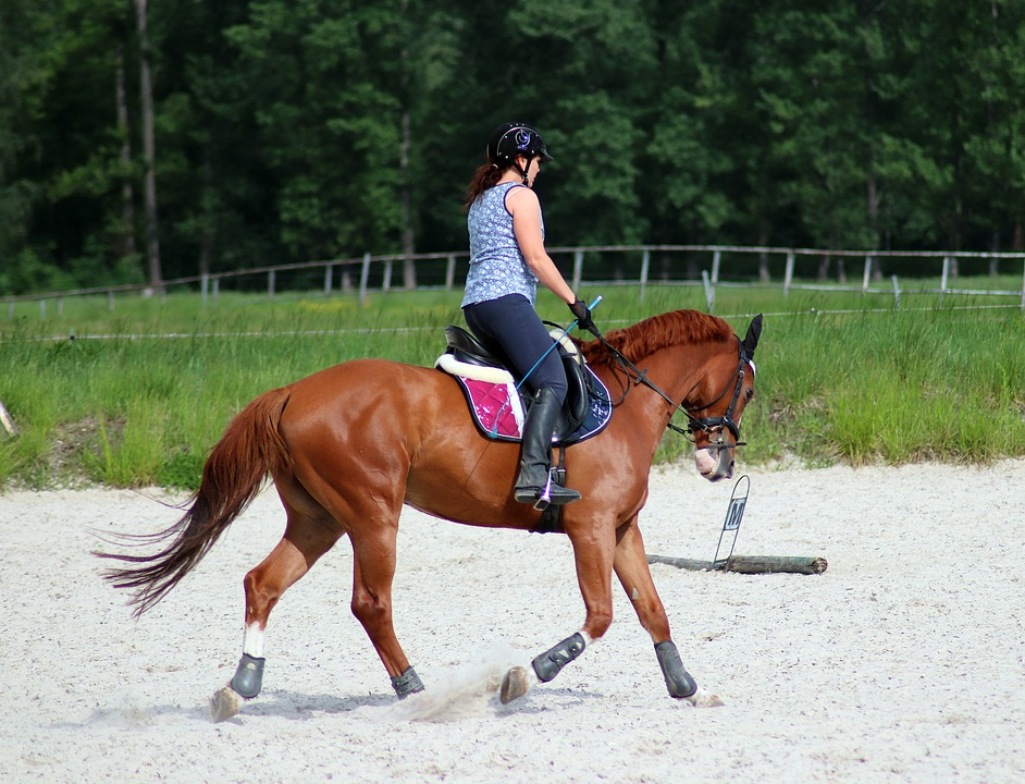 horse-exercise