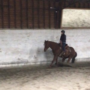 how-to-sit-a-reining-stop
