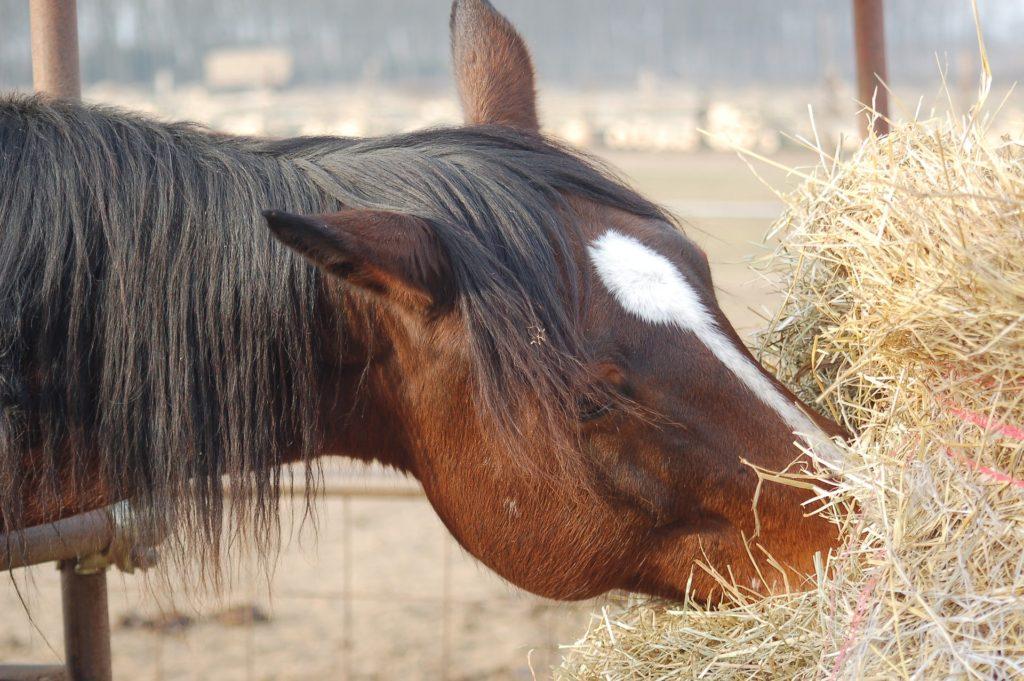 horse-hay-faqs