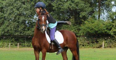 horseback-riding-safety-equipment-min