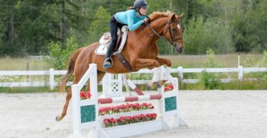 ride-horses-budget