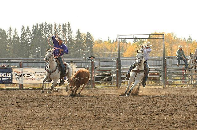 what-is-team-roping-min
